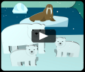 Arctic animals video