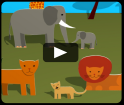 Animals of the African savannah video